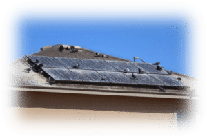 Pigeons infestation by solar panels