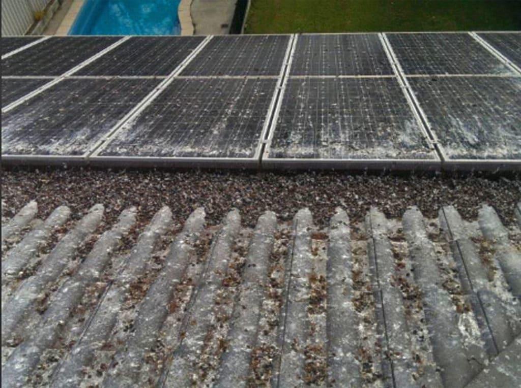 Solar bird waste